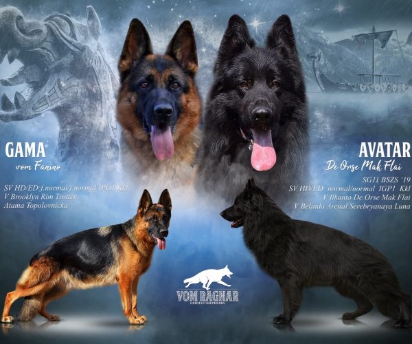 Gama and Avatar litter poster